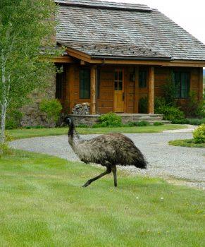 Foley Ranch - Office Property - Emu!